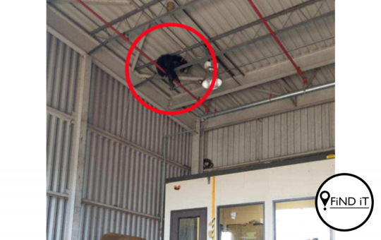 Bear rescued from warehouse rafters, Virginia, USA