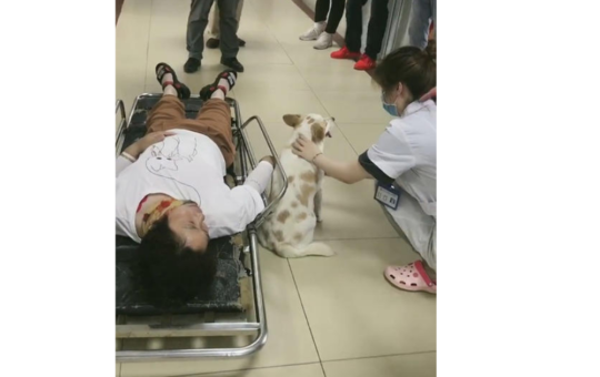 Adorable dog refuses to leave owner following serious accident