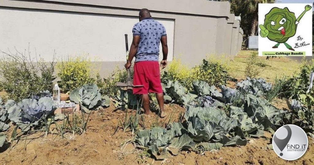 Tshwane resident in hot water over cabbage patch on pavement